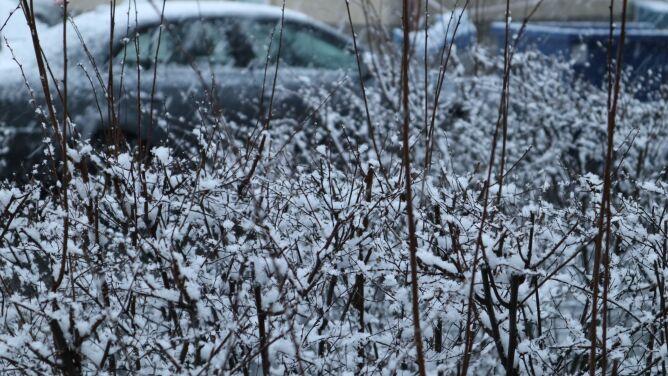 Pogoda na dziś: miejscami będzie prószyć śnieg, do pięciu stopni Celsjusza