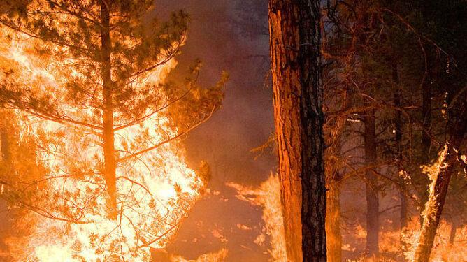 """""""Powietrze drgało od gorąca"""". Minęły 23 lata od wielkiego pożaru w Puszczy Noteckiej"""
