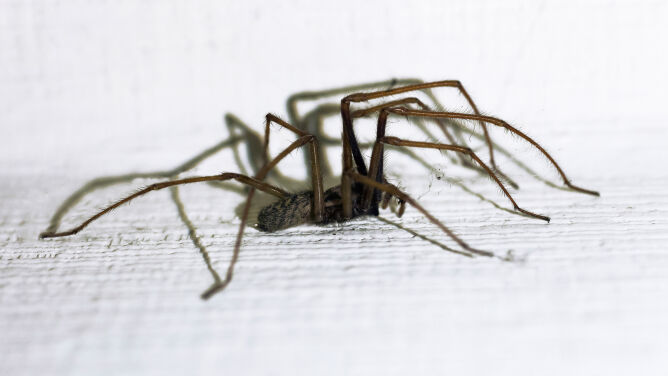 Boisz się pająków? Niepotrzebnie. <br />Są naszymi sprzymierzeńcami