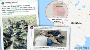 Dziesiątki martwych kondorów w Andach. Wyjaśniona tajemnica śmierci ptaków