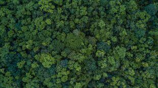 Drzewa mogą pomóc odszukiwać ludzkie zwłoki