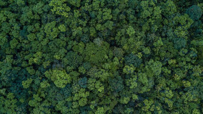 Drzewa mogą pomóc <br />odszukiwać ludzkie zwłoki