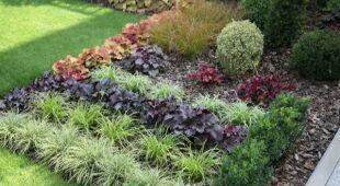 Mały ogródek pełen kolorów. Rośliny balkonowe, odc.394